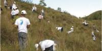 Reforestacion del rio ozama